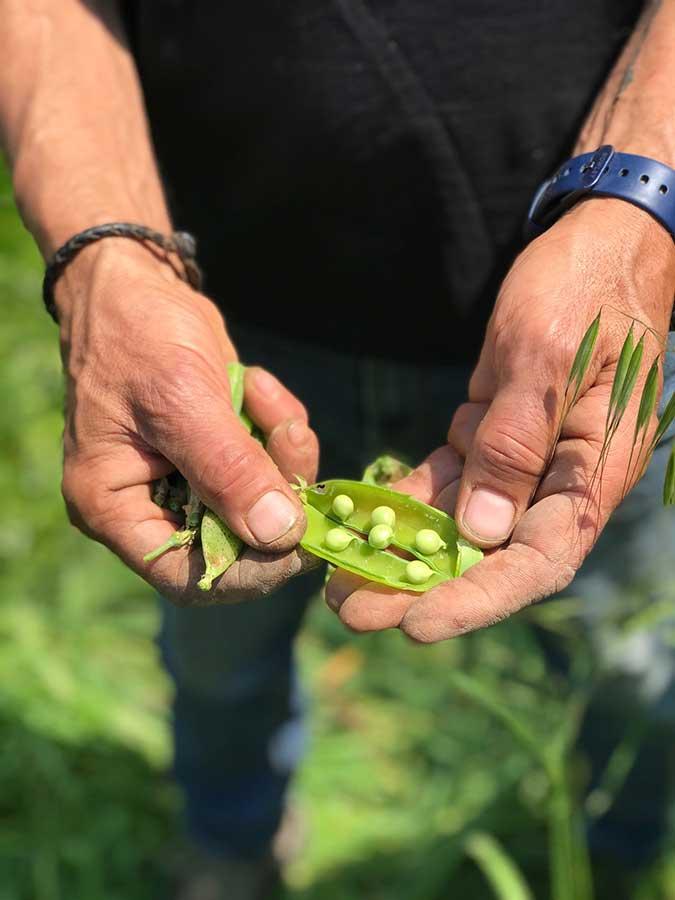 verduras-de-la-ensaladilla-Cuina-DeTerritori-Els-Magazinos-Denia-2021-2a