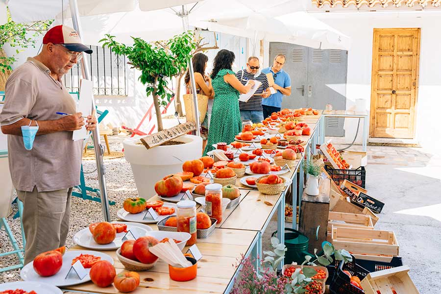 2-Concurso-de-la-millor-tomaca-de-La-Marina-Els-Magazinos-3a